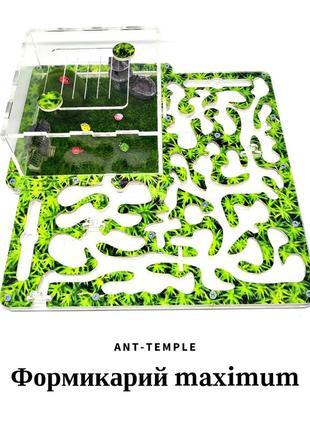 Муравьиная ферма, формикарий, муравейник, муравьи, messor, фор...