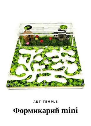 Муравьиная ферма, messor ctrucror, формикарий, муравьи