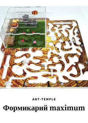 Муравьиная ферма, муравьи, формикарий, жнецы