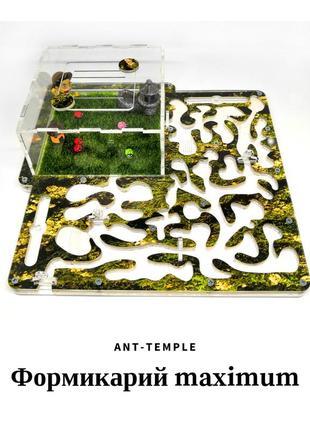 Муравьная ферма, ant house, формикарий