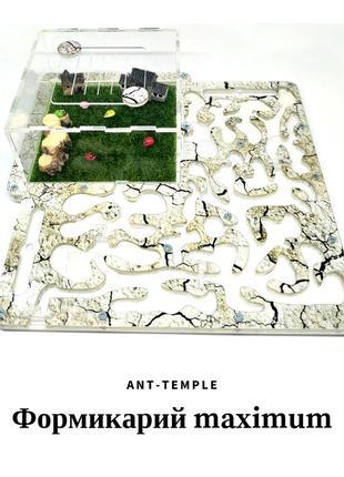 Муравьиная ферма, формикарий, муравьи