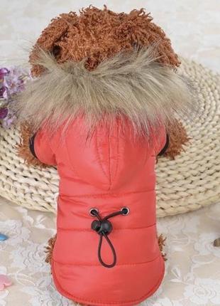 Пуховик куртка для собаки собачки одеджа зимняя чихуахуа йорк ...