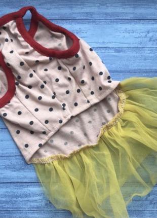 Платье (одежда) для маленькой собачки собаки чихуахуа той терь...