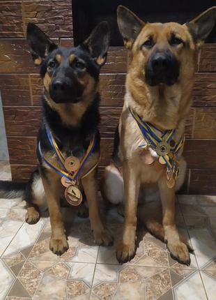 Питомник elKarin предлагает к бронированию щенков от шикарной пар