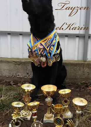 Дети от Чемпиона немецкой овчарки ФСССУ