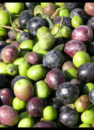 Региональные представители оливок и оливкового масла.