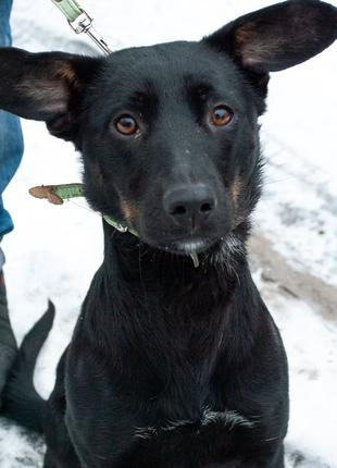 Агата - щенок в добрые руки