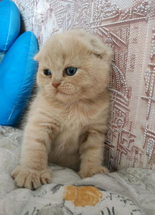 Продам шикарных плюшевых котят!