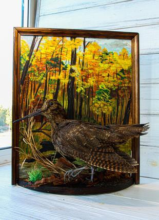 Чучело птицы Вальдшнеп ручной работы