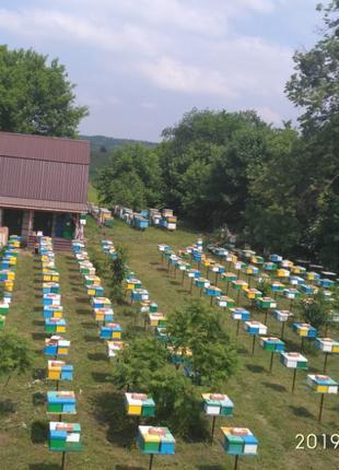 Матки Карника 2021 ИО (ШО), Зимувалі, F1, Бджоломатки, Пчеломатки