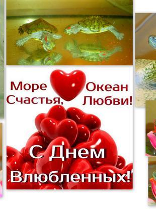 Красноухие черепашки - море счастья и любви! Заказывайте сейчас!