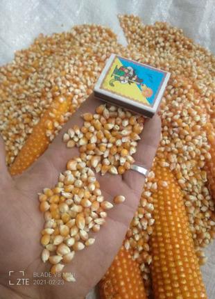 """Кукуруза для приготовления """"Попкорна"""""""
