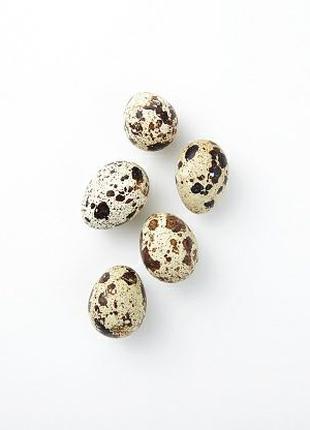 Яйца перепелиные столовые