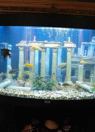 Обслуживание аквариума(недорого),чистка аквариума
