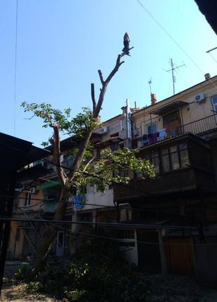Спилить дерево не наломав дров.Опыт 13 лет.