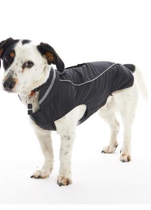Для собаки buster костюм+ поводок +ошейник xs