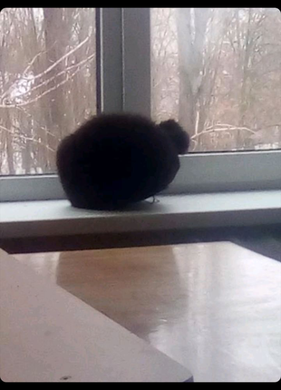 Шапка из кота