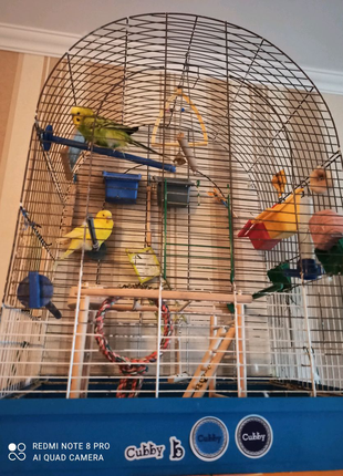 Продам парочку попугаев