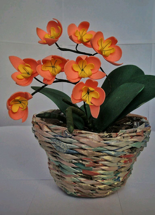 Орхидея и гортензия в вазонах