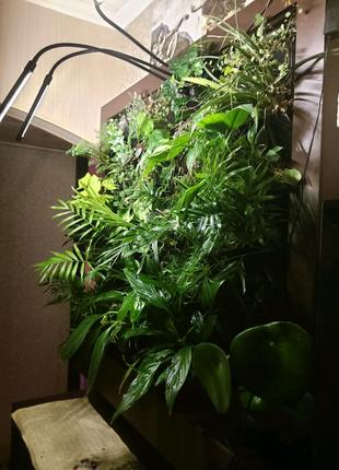 Вертикальное озеленение, фитомодуль, контейнер для растений