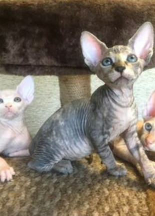 Кошечки Эльфы