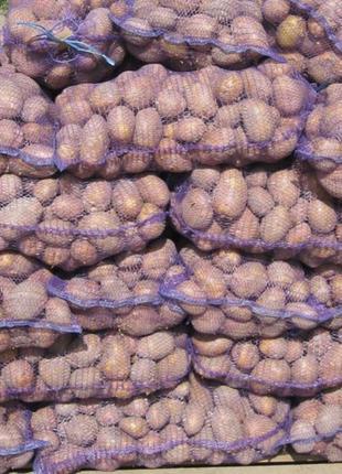 Продаємо картоплю, буряк, моркву, цибулю