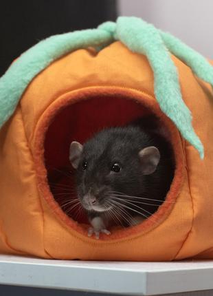 Домик тыква для крыс