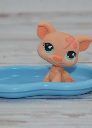 Фирменный набор пет шопы pet shop игрушки зоомагазин littlest ...
