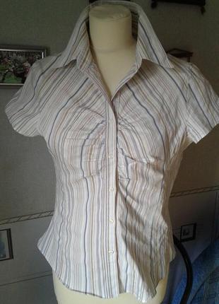 Блуза-рубашка в полосочку стрейч катон р 44-46 next