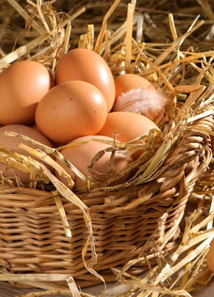 Яйця інкубаторскі