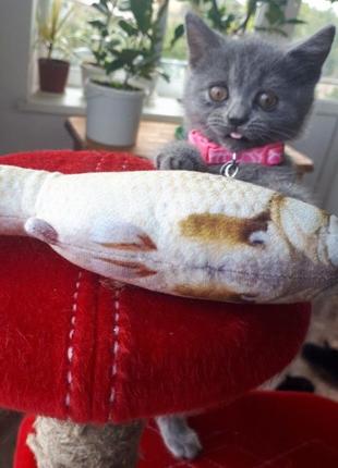 Рыбка игрушка для кошек
