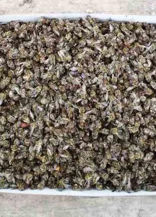 Бджолиний підмор сухий Хитозан Пчелиный подмор сухой весна 2021