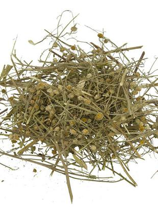 Полынь трава