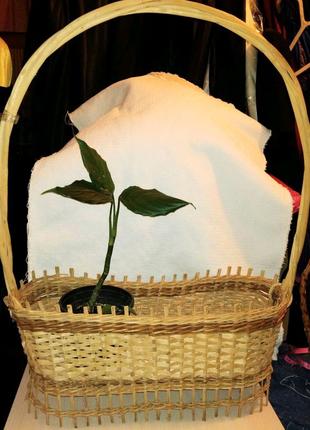 Корзина с лозы для цветов, декора, подарков