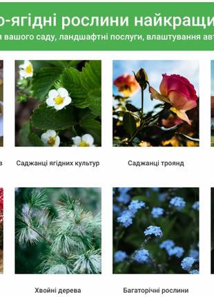 Сайт для садового центра