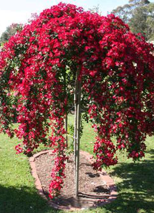 Опора зонт для цветов сад огород ландшафт.