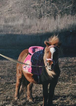 Пони для самых маленьких