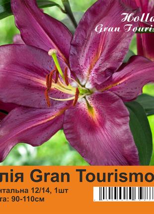 Лилия луковицы Gran Tourismo 90-110 см Holland