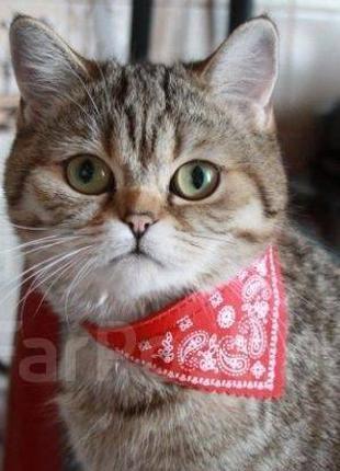 Ошейник-бандана для котов и собачек