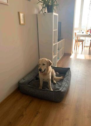 Лежаки для больших собак