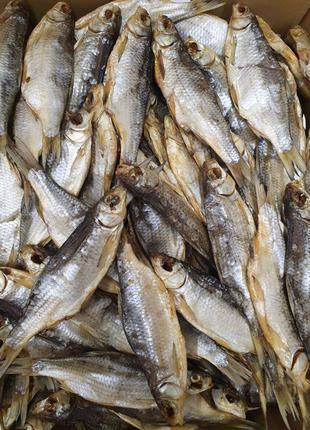 Вобла Астрахань.Вяленая Рыба.