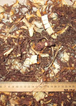 Можжевельник обыкновенный корень Juniperus communis.