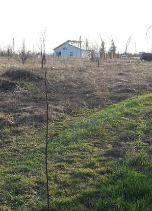 Земельный участок селе Петровское  под строительство дома