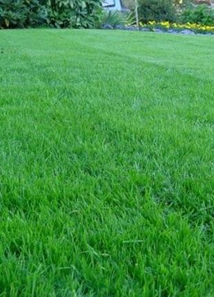 Газонна трава, трава для спортивних майданчиків, футбольних полів