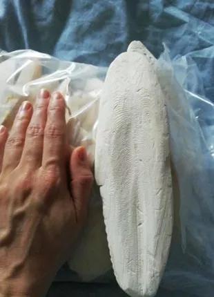 Натуральная Сепия, кость каракатицы 1кг.