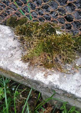 Продам лесной мох...недорого