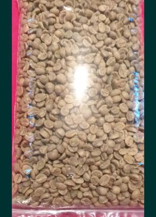 Кофе арабика семена для выращивания растений