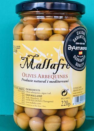 Оливки испанские сорт Арбекіна