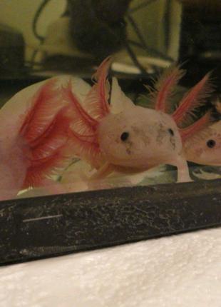 Симпатичная рыбка с лапками