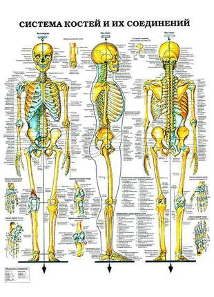 Медицинские плакаты